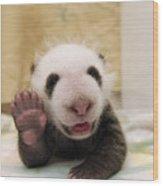 Giant Panda Ailuropoda Melanoleuca Cub Wood Print