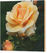 Glowing Rose Wood Print