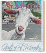 Goats Of St. Maarten- Sofie Wood Print
