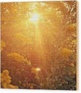 Golden Days Of Autumn Wood Print