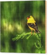 Goldfinch On Grass Wood Print
