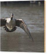 Goose In Flight Wood Print