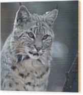 Gorgeous Bobcat's Face Up Close Wood Print