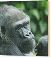 Gorilla Headshot Wood Print