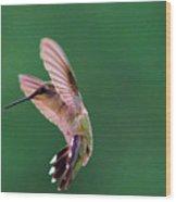 Grace Of A Hummingbird Wood Print