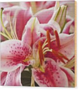 Graceful Lily Series 15 Wood Print