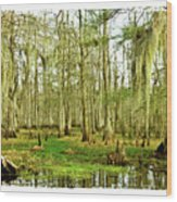 Grand Bayou Swamp  Wood Print