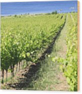 Grapevines In A Vineyard Wood Print