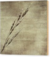 Grass Seeds Wood Print
