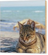 Gray Cat On The Background Of The Sea 1 Wood Print