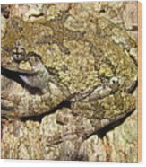 Gray Tree Frog Wood Print