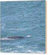 Gray Whale Wood Print
