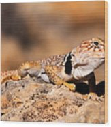 Great Basin Collared Lizard Wood Print