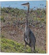 Great Blue Heron - 12 Wood Print