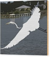 Great Egret At Melbourne Beach Wood Print