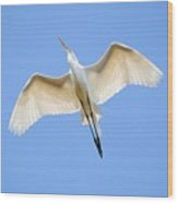 Great Egret In Flight Wood Print