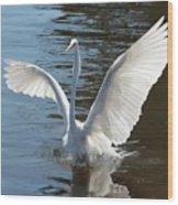 Great Egret Wings Wood Print