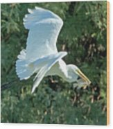 Great Egret With Fish Wood Print