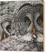 Great Grey Wake Up Wood Print