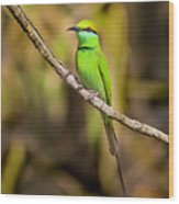 Green Bee-eater Wood Print