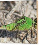 Green Dragonfly Closeup Wood Print
