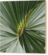 Green Fan Wood Print