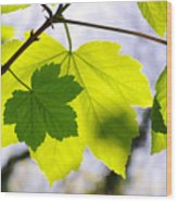 Green Leaves Wood Print