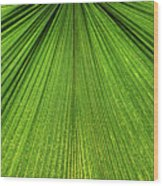 Green Lines Wood Print