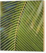 Green Palm Leaf Wood Print