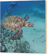 Green Sea Turtles  Wood Print by Dave Fleetham - Printscapes