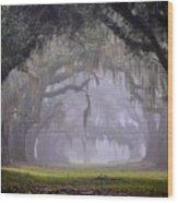 Greenwood's Oak Alley Wood Print