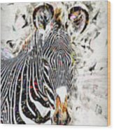 Grevys Zebra, Samburu, Kenya Wood Print