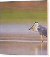 Grey Heron Ardea Cinerea Wood Print