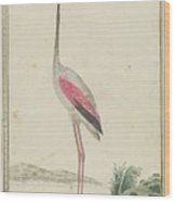 Grote Flamingo Wood Print