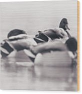 Group Of Ducks Wood Print