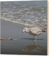 Gull With Fish  Wood Print