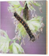 Gypsy Moth Caterpillar Wood Print