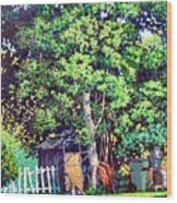 Hackberry Tree Wood Print