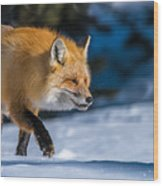 Handsome Mr. Fox Wood Print