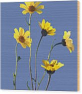 Happy Daisies II Wood Print