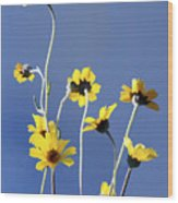 Happy Daisies Wood Print