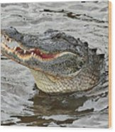 Happy Florida Gator Wood Print