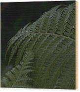 Hapuu Pulu Hawaiian Tree Fern  Wood Print