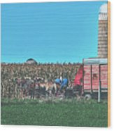 Harvest In Amish Country - Elkhart County, Indiana Wood Print