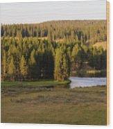 Hayden Valley 2 Wood Print
