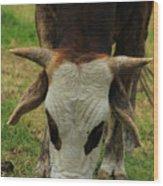 Head Of A Bull Wood Print