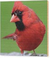 Hello Cardinal Wood Print