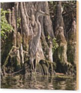 Heron And Cypress Knees Wood Print