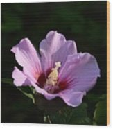 Hibiscus Light Wood Print