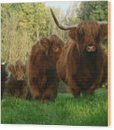 Highland Cows Wood Print